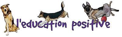 Education canine positive 1