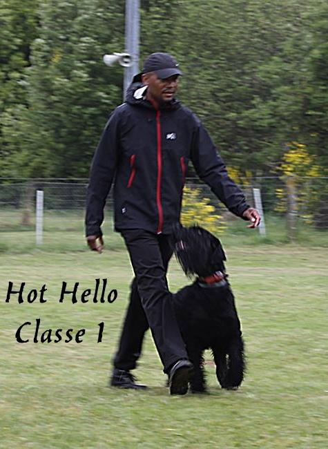 Hot hello du Soleil des Barbes noires classe 1 d obeissance
